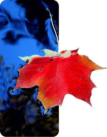 Yellow leaf floating on blue water
